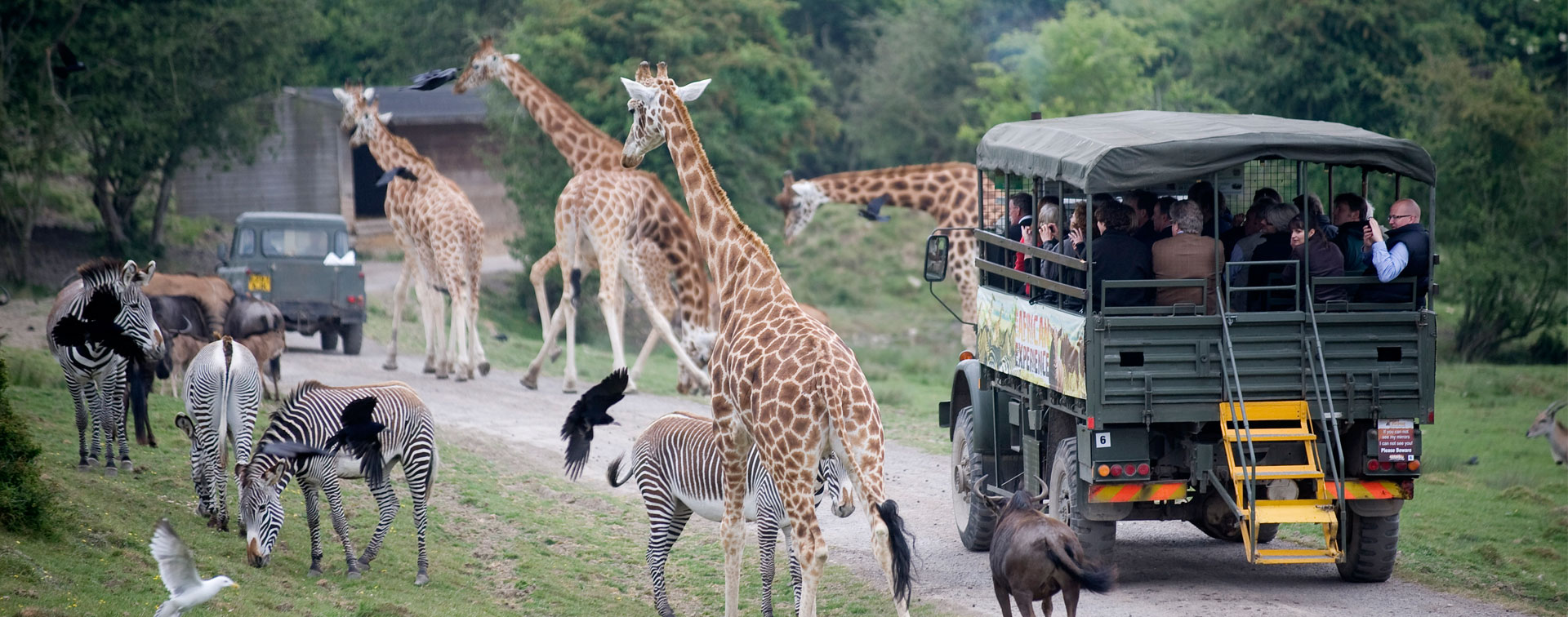 varied animals alongside safari jeep