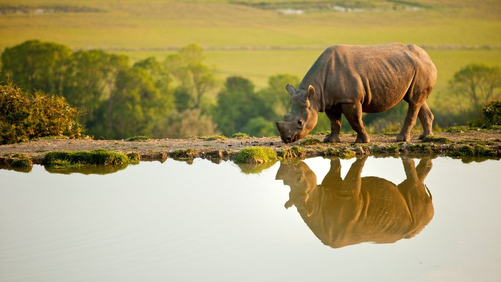 Visit a Rhino in a beautiful natural environment